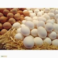 Продаю куриные столовые яйца оптом, цена 8 грн
