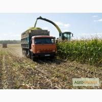 Услуги по уборке кукурузы на силос кормоуборочными комбайнами, опрыскивание полей