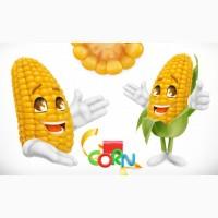 Куплю кукурузу на элеваторе НАЛ