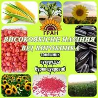 НК «ГРАН» пропонує насіння соняшника «Атілла»