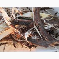 Кора можжевельника, Карпат, эко натур Juniperus communis