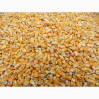 Кукурудза дорого самовивіз