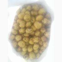 Продам товарный картофель первого урожая сорт Ривьера, Херсонська обл