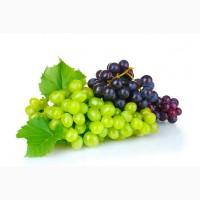 Продажа винограда на экспорт
