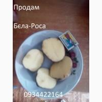 Картопля, Бульба Домашня Продам До 2 ТОНН
