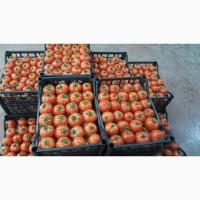 Продам помидор, турция, tarim kredi kooperatifleri