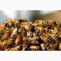 Продам сімЇ бджіл