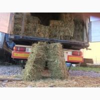 Сено кормовое люцерка в тюках с доставкой в Запорожье