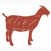 Продам коз живым весом 100 грн