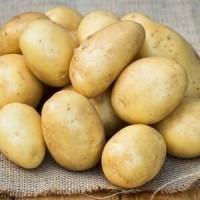 Купим картофель оптом, молодой от 10т, ВНИМАНИЕ