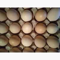 Продам яйця домашні натуральні