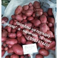 Продам товарный И семеной картофель. Сорт Ривьера Мелоди