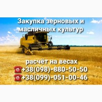 Закупка Пшеницы всех классов
