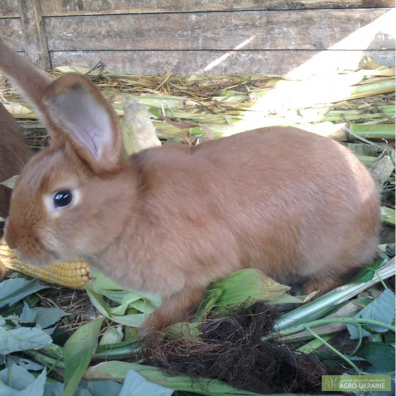 нзк кролик фото в кемеровской области обвинил анну