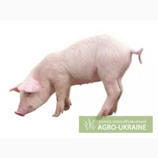Концентрат для свиней Гровер/Финишер 15 - 10% (Голландия)
