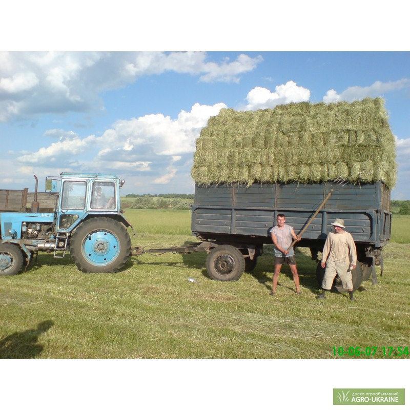 заявка купить сено в тюках нужд кухни