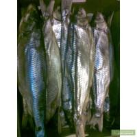 Морепродукты, рыба сушёная (Кутум)