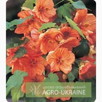 Семена абутилона - Abutilon F1 (Китано)
