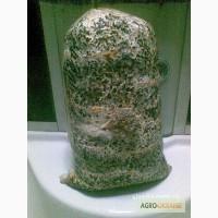 Мицелий грибов и грибные блоки