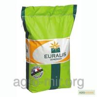 Гибрид подсолнечника Евралис EC Белла (Euralis Bella)