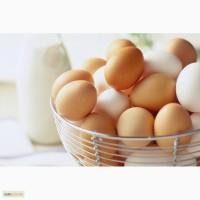 Продам яйца куриные, CO+, CO, C1, C2, грязь, бой/тек, насечка, меланж все от производителя
