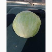 Продам капусту позднюю белокачанную, сорт Бригадир, Анкома