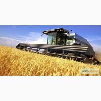 Купуемо Пшеницю с хозяйств та єліваторів