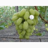 Продаем свежий вкусный крупный виноград