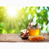 ТОВ БІХАЙВ - круглий рік закуповуємо мед оптом