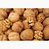 Оптовая продажа и экспорт грецкого ореха
