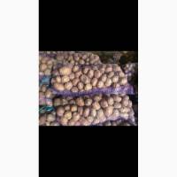 Продам картошку напрямую от производителя от 10 тонн - узнай и сэкономь