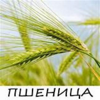 Пшениця 2-кл, 3-кл, 5, 6-кл