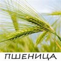 Пшениця 2, 3, 4, 5, 6 класів і всі зернові дорого за грн / $$$