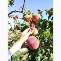 Яблоки, виноград Быстрая загрузка
