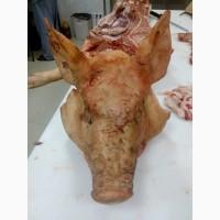 Головы свиньи