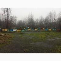 Продам бджолосім`ї з вуликами в кількості 50 штук