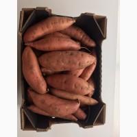 Продать Картофель БАТАТ