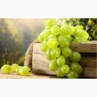 Продам виноград элитных сортов с собственных садов