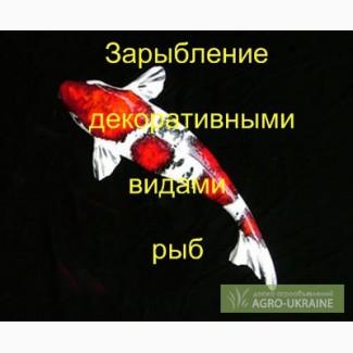 Зарыбление декоративной рыбой