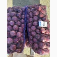 Продам лук фиолетовый от производителей и поставщиков