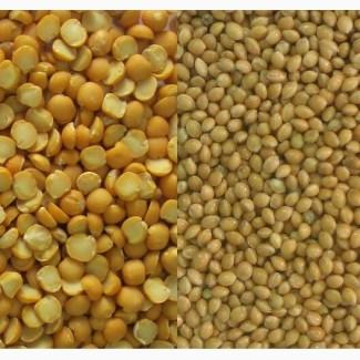 Куплю сою кукурузу подсолнечник гречку пшеницу горох половинки Сумы Тернополь Полтава