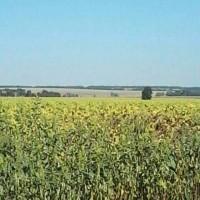 Замовити Газель до 1, 5 тон 9 куб м Київ область Україна вантажник