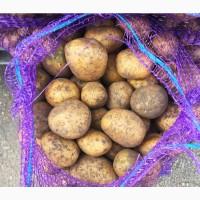 Продам картофель на посадку на корм