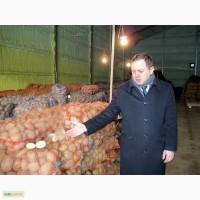 Реализуем картофель! и овощи по России и Крыму