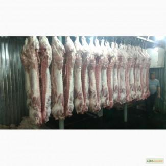 Мясо Свіже Охолоджене в пів тушках