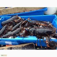 Краб, морской гребешок, ракообразные и молюсковые из Норвегии