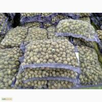 Продам семенной картофель, сорт Мелоди, Таисия
