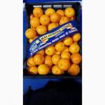 Прямой поставщик мандарин( клементин) MALAGRINO Италия