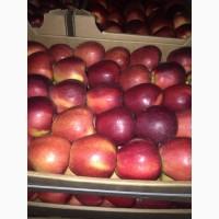Продам яблоко оптом от 8 тонн