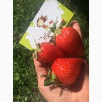 Продаем ягоды клубники